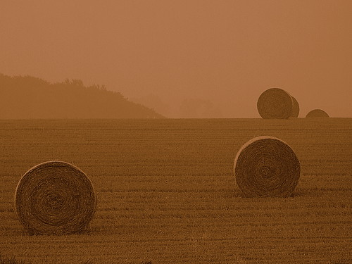 Harvesting at Sunrise....just made Explore #409. | by skittzitilby