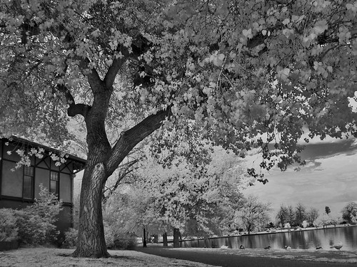 washington park in infrared | by the eye in TEAM