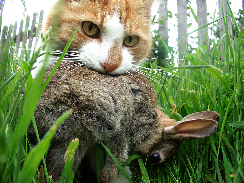 Tabby cat bad behavior