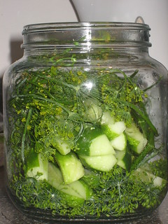 refrigerator pickles | by sheri219