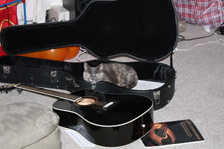 Fudgebar in my guitar case | by Dossy