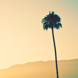Palmtree | by manganite