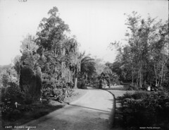 Botanic Gardens, Sydney | by Powerhouse Museum Collection