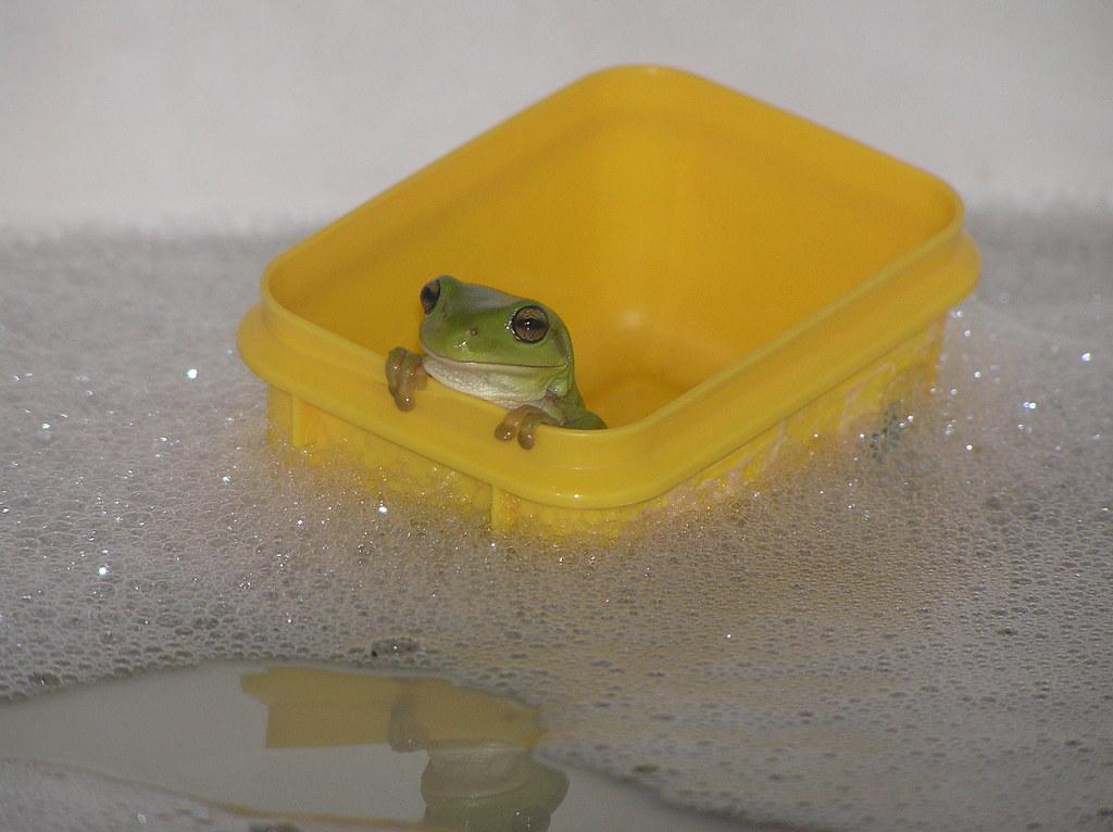 tubfrog