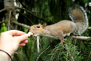 Squirrel in pine tree 2 | by Questionable Ethics