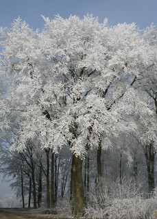 Dreaming of a white Christmas | by Clare L H