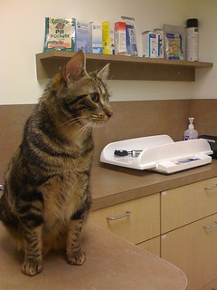 Ozu at the vet | by HeyRocker