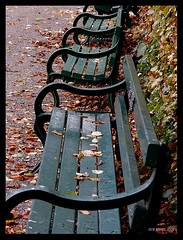Benches and beech leaves | by sue tortoise