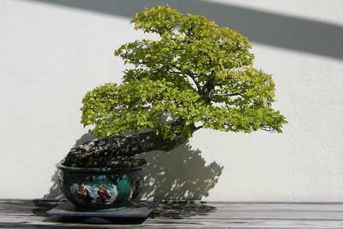 Arboretum- Bonsai | by Meghan Rutherford