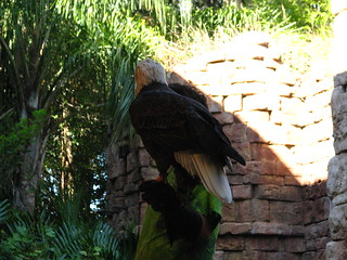 At Disney's Animal Kingdom 11/28/2008 | by HughesOnTheNet