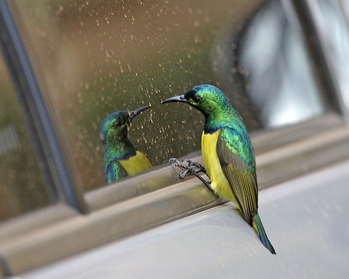 Mirror, mirror... wish humans could keep cars clean. | by Lip Kee