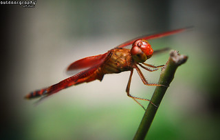 Outdoorgraphy™: Red Hot Lips! | by Sir Mart Outdoorgraphy™