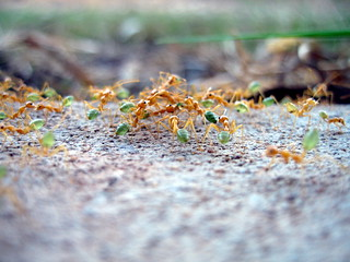 Ants | by factoids