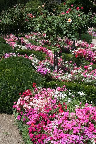 Filoli Gardens Swaths Of Color Jill Clardy Flickr