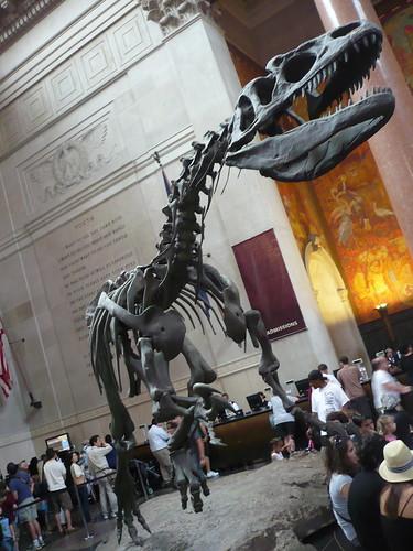 Nyc Natural History Museum Exhibits