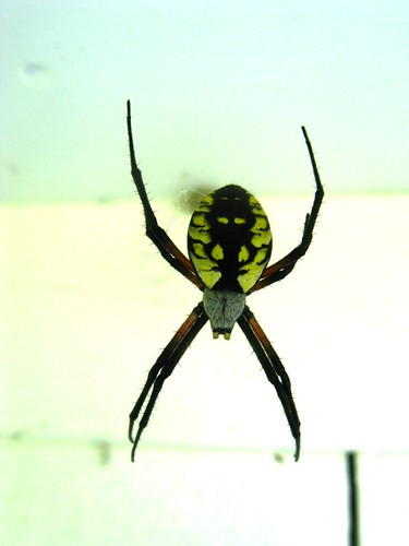 Huge Maine Spider Perched Above The Back Door Of The