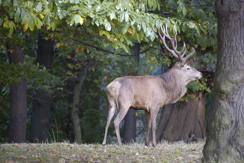 rutting season | by grannie annie taggs