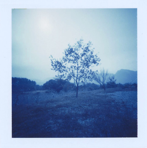 tree/blue | by mistubako