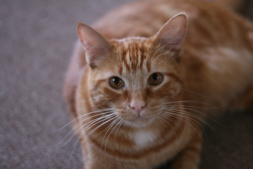 Herman (Pam's Cat) | by Food Librarian