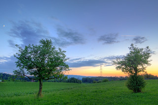 Two trees and a sunset | by Tambako the Jaguar