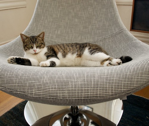 New cat. New chair. | by Stewf