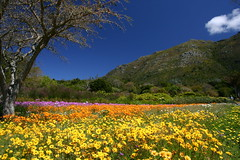 Kirstenbosch National Botanical Garden | by Derek Keats