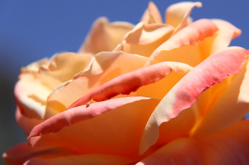 Shades of Peach | by Georgie Sharp