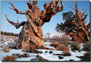 Gnarly | by Rick Goldwasser Photography