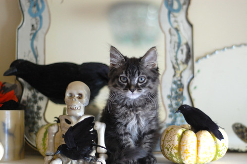 Halloween Still Life with Albert Livermore | by *lalalaurie