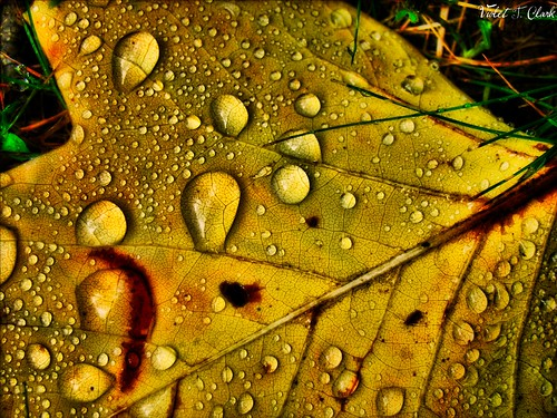 One Leaf's Texture | by Timeless Legacy