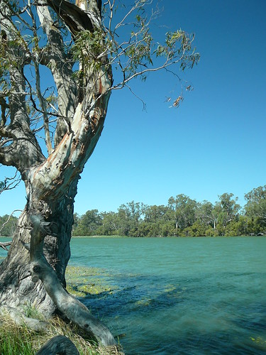 Red Gum on the Murray | by ljhar6