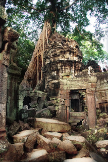 Ta Prohm II | by fesign