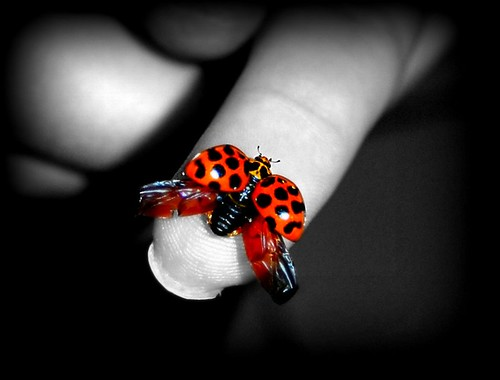 Sarah and the Ladybug #2 | by Flailinginge