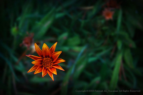 Syrian Flower | by fatimah.f.n