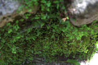 moss | by Tiffany Turrill