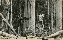 Tree loggers | by State Archives NSW