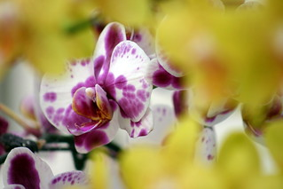 Orchid | by Dan Coulter