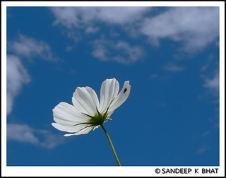 Flower Bug Clouds | by Sandeep K Bhat