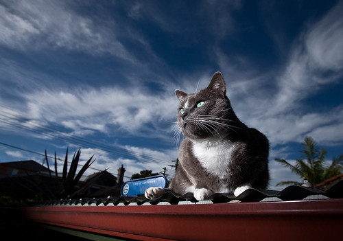 Cat on a hot tin roof | by Grumpysumpy