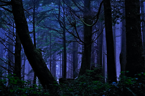 Rainforest Night Magic | by Fort Photo
