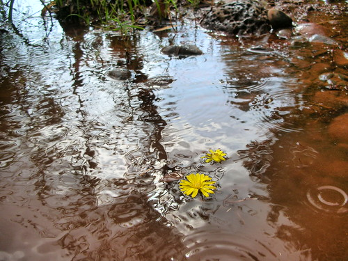 Raindrops and Flowers on Oak Creek in Sedona | by joyfulattachments