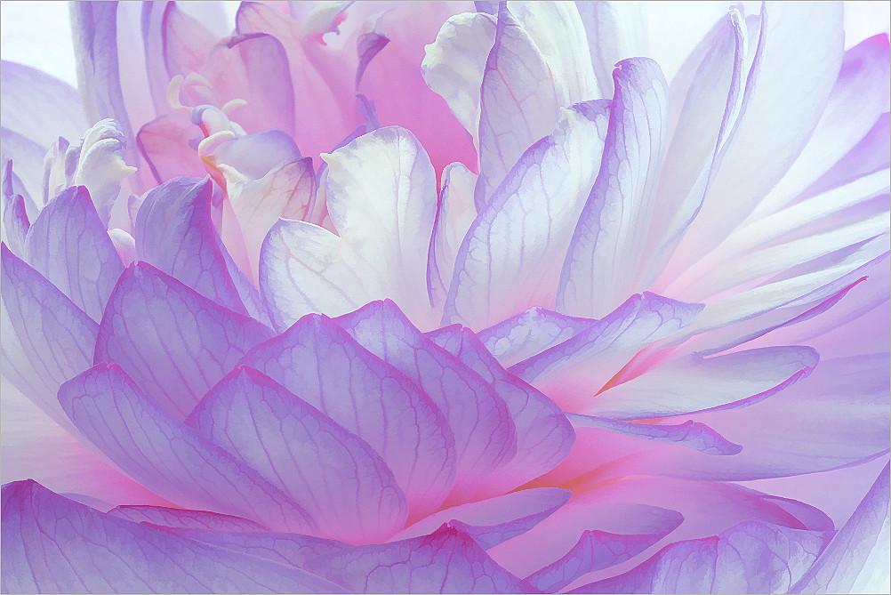 Purple lotus flower purple lotus flower bahman farzad flickr purple lotus flower by bahman farzad mightylinksfo