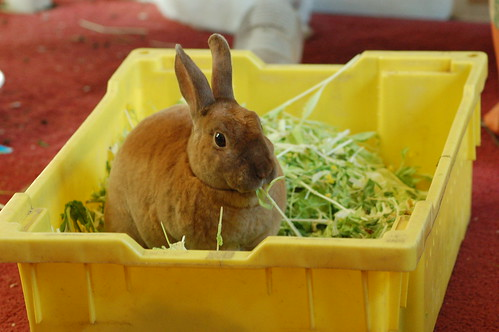 Excuse me, waiter, there seems to be a rabbit in my salad | by Carly & Art