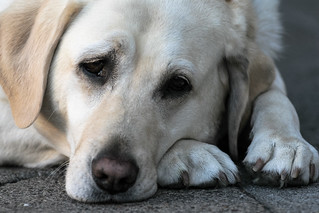 sad dog | by protographer23