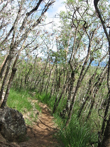 how to get to sleeping giant trail head