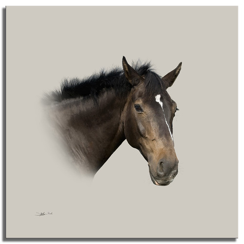 A Horse Called Dave | by SallyT.