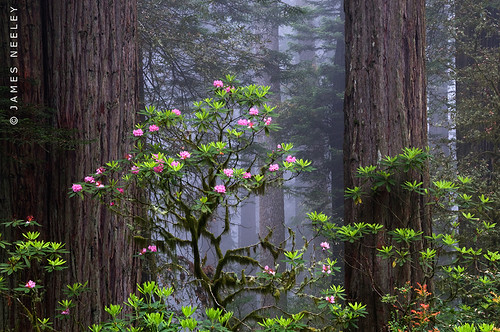 Remembering - Fog in the Forest | by James Neeley