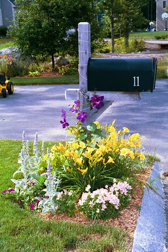 mailbox planting 2 normanack flickr. Black Bedroom Furniture Sets. Home Design Ideas