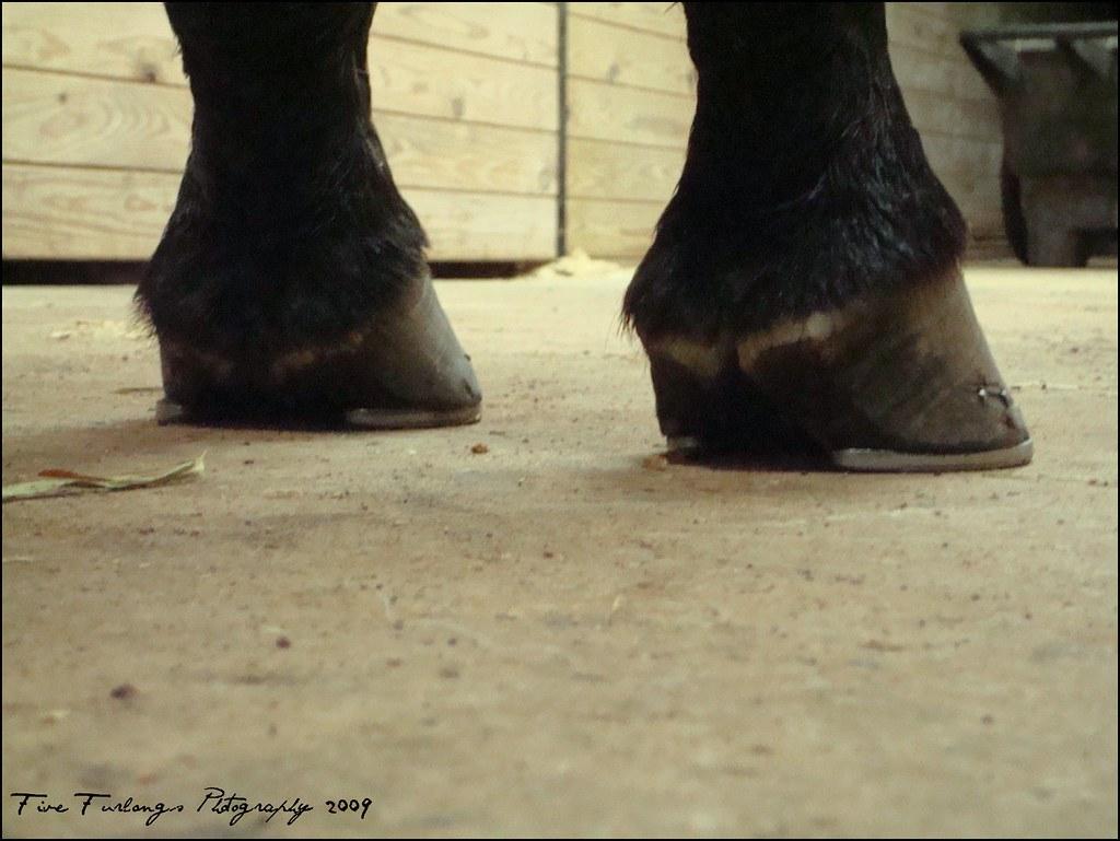 uneven hooves