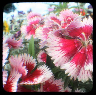 pinks ttv | by lifelovepaper
